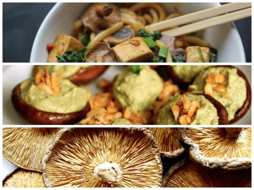 mushrooms newsletter