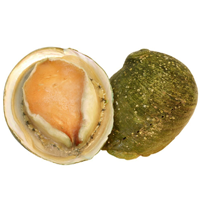 Abalone, floured or breaded, fried
