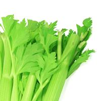 Celery, Raw