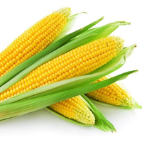 Corn, Sweet, Yellow