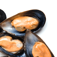 Mussel, Blue, Moist Heat