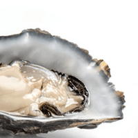 Oyster, Eastern, Fried