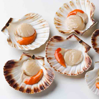 Scallops, coated, baked or broiled, fat not added in cooking