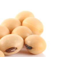 Soybeans, cooked, fat not added in cooking